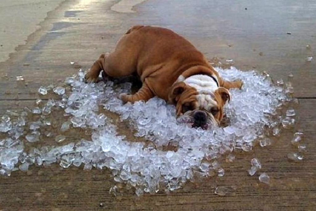 How do dogs cool down?