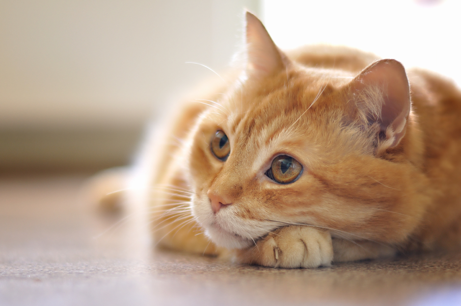 Skin Lumps on a Cat: Types, Causes & Treatment